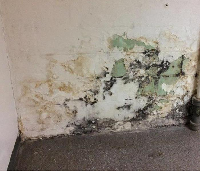 Mold Remediation Mold & Your Health